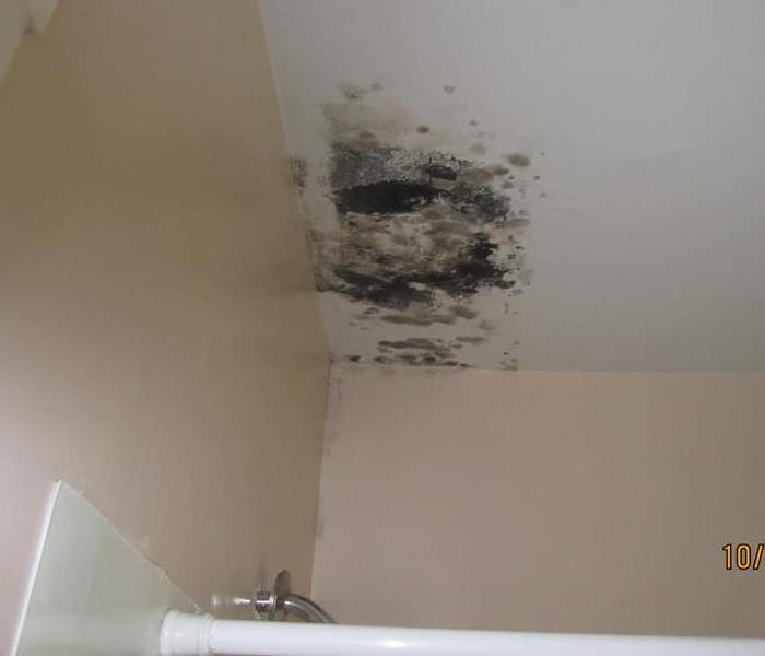 Mold living in the bathroom