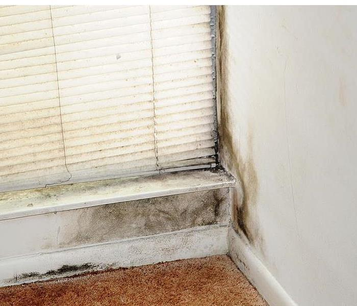 Mold Remediation Signs to watch for MOLD in your home
